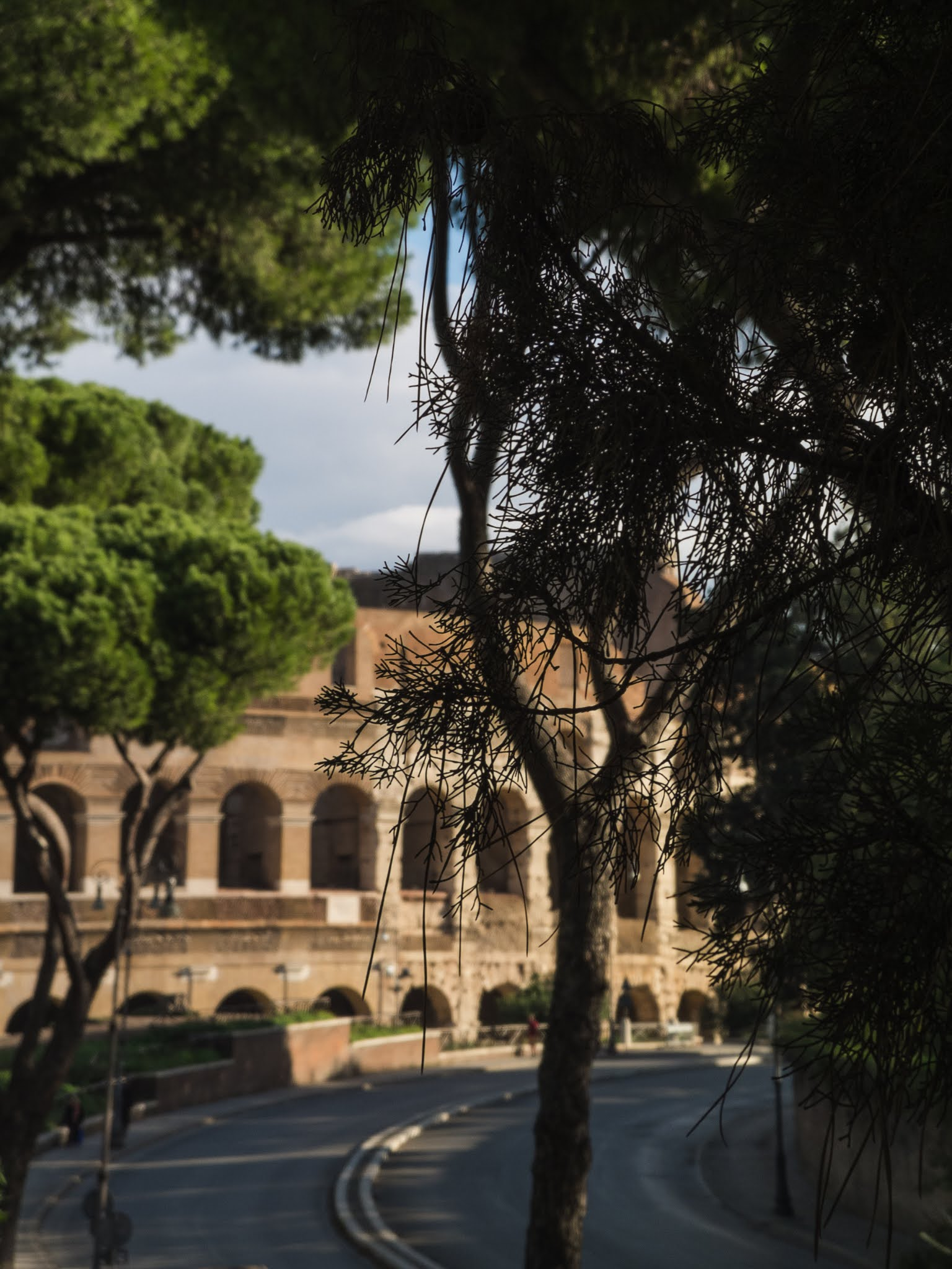 View of the Colosseum through pine tree branches on the Palatine Hill.