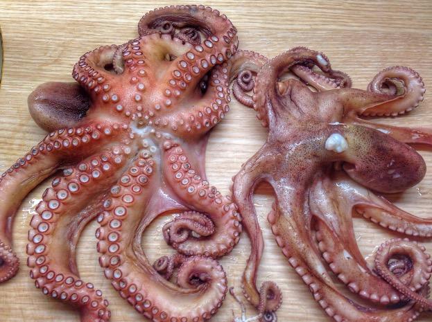 осьминог черногория, черногория морепродукты, где в черногории вкусные морепродукты, черногория петровац