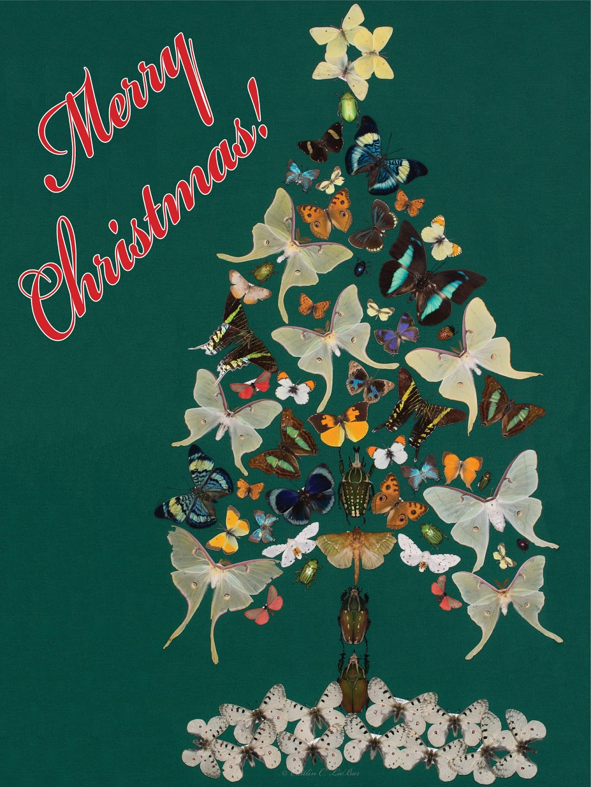 Northwest Butterflies Merry Christmas And Happy New Year
