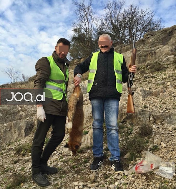 Red fox killed in the protected area of Kune-Vain of Lezha