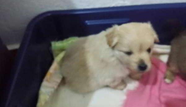 cachorro de talla pequeña 2