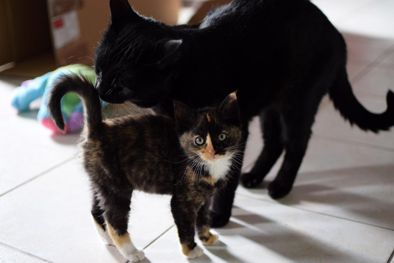 l arriv e d un chaton quand on a d j un chat plus g e la maison mon exp rience mes. Black Bedroom Furniture Sets. Home Design Ideas