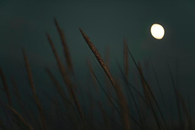 Sabda Malam || Puisi