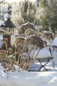 so sieht der Garten auch im Winter schön aus
