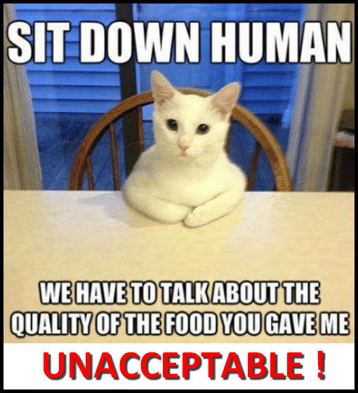 Sit down human. We have to talk about the quality of the food you gave me. UNACCEPTABLE!