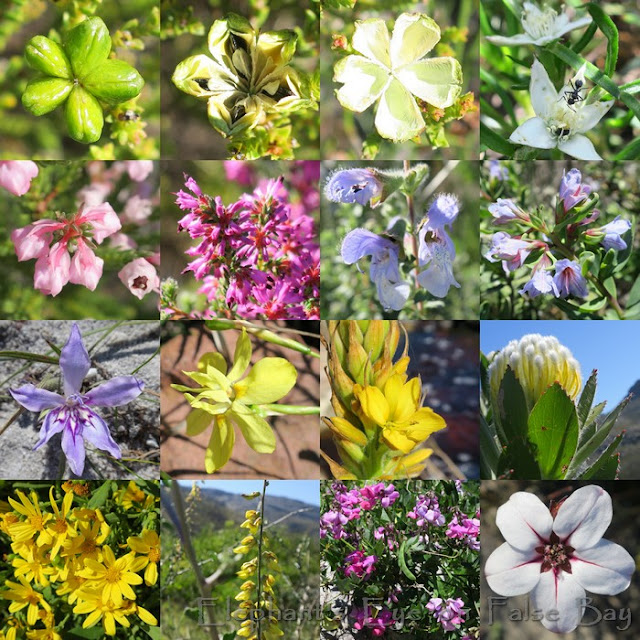 August flowers for Sunbird Centre in Silvermine