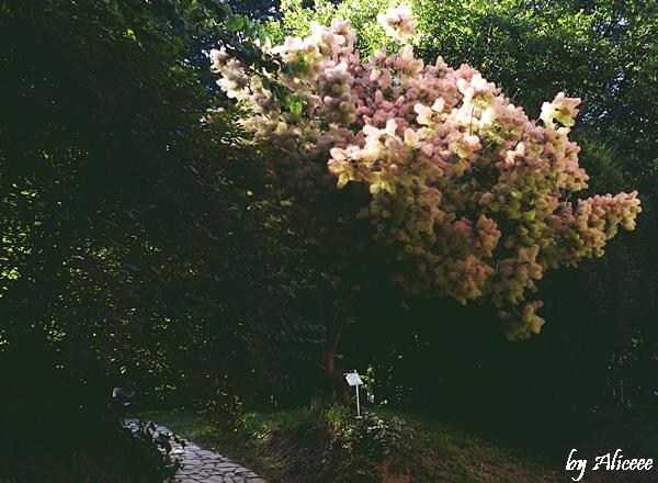arbore-gradina-botanica-belgrad