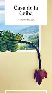 las-cosechas-casa-ceiba-clases-experiencias-aeroyoga-yoga-aereo-aerea-air-nutricion-ayurveda-columpio-hamaca-swing-trapeze-puerto-rico-flor-platano