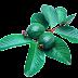 Maruthuva Kurippu in tamil : Benefits of guava fruits