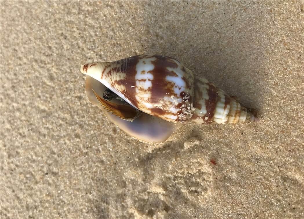 砂浜に落ちている綺麗な貝柄の写真