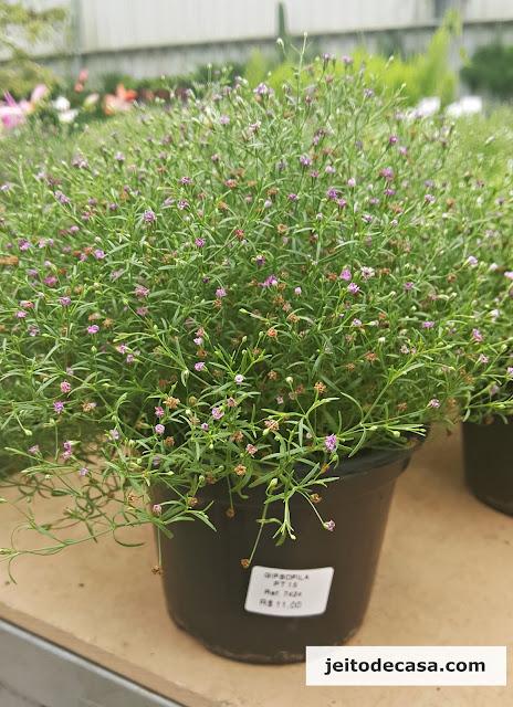 mosquitinho-flor-lilás