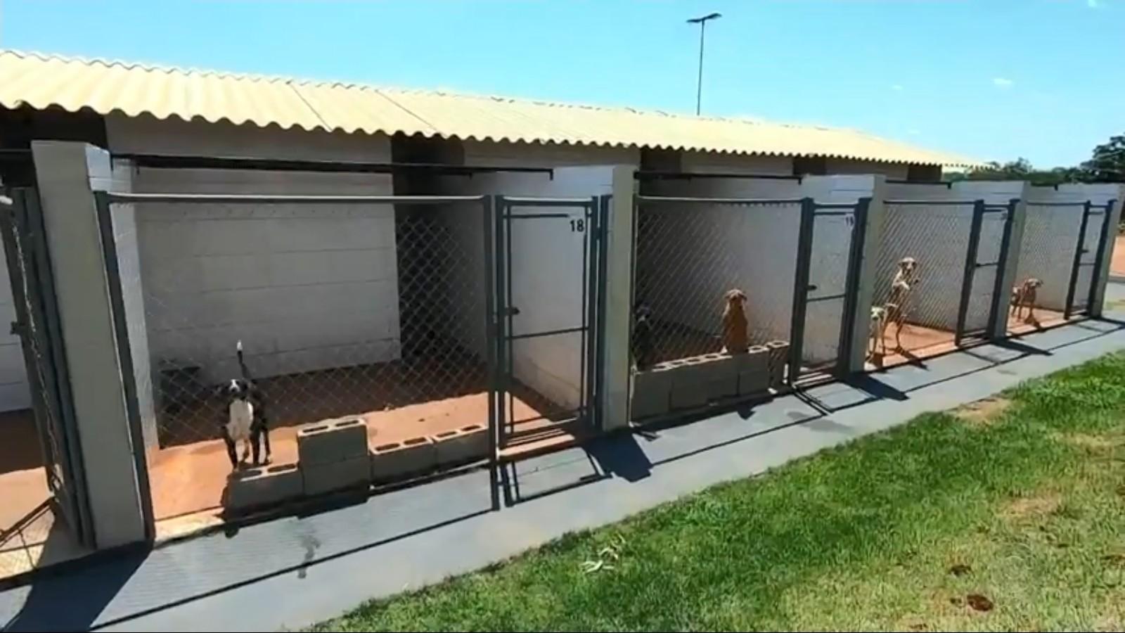 Centro de acolhimento em Olímpia oferece tratamento para animais vítimas de abandono e maus-tratos
