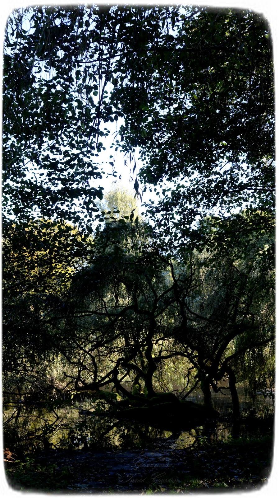 Herbst Tagundnachtgleiche, grazynastarotgarten.blogspot.com