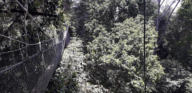 Titian Silara @ Taman Negara