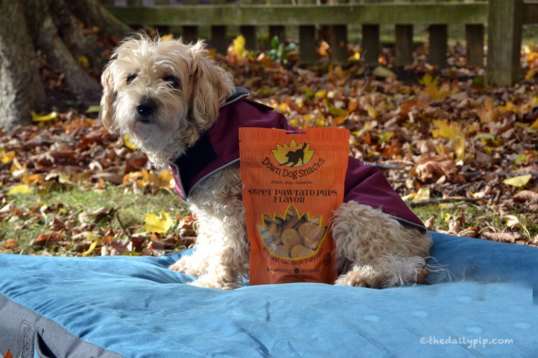 Ruby reviews Down Down Snacks for the #houndsandholidays gift guide and givewaway