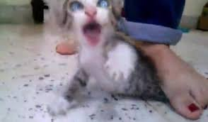 تعديب  قطة حتي الموت كلاب ابن كلاب