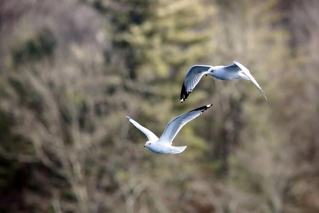 TwoSeagulls