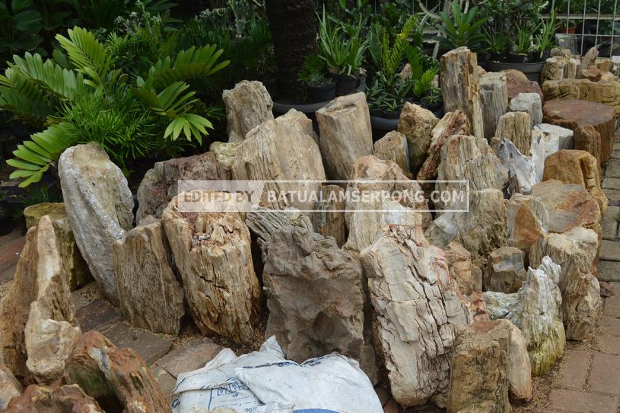 harga batu fosil