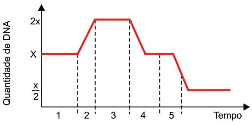 FAMERP 2021: Analise o gráfico, que ilustra a variação na quantidade de DNA que ocorre no núcleo de uma célula germinativa.