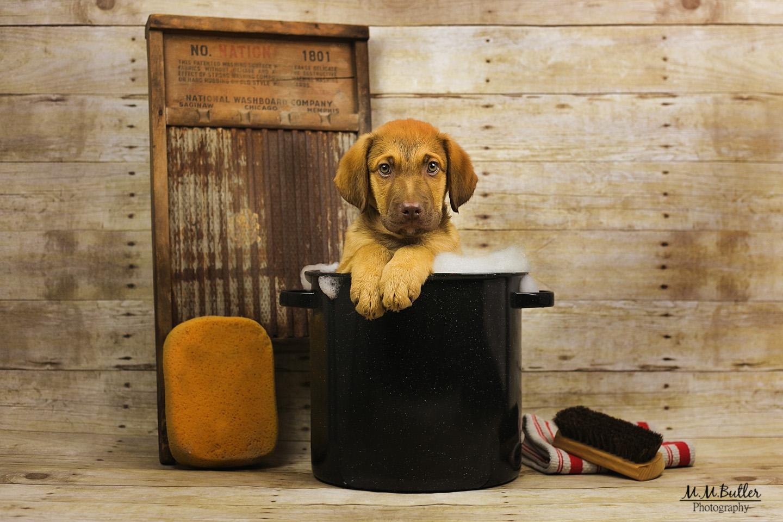 Puppy wash