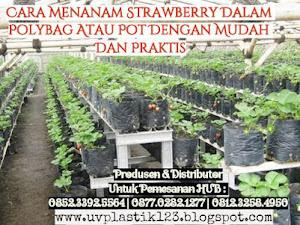 Manfaat Plastik Uv - Cara Menanam Strawberry Dalam Polybag Atau Pot Dengan Gampang Dan Praktis