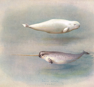 2D: NARWHAL