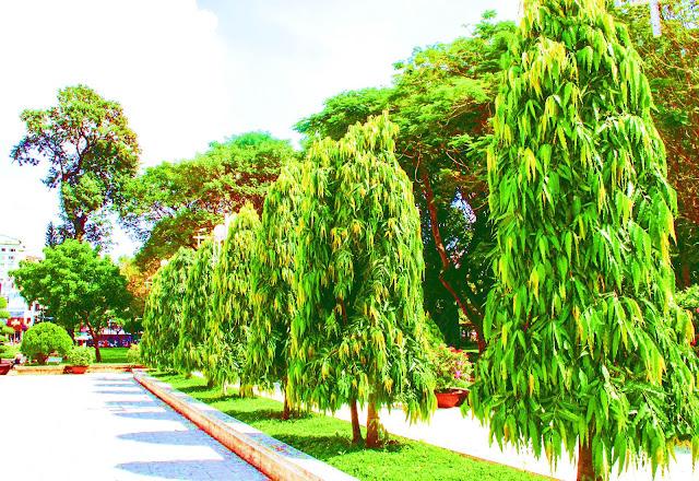 ashoka tree importance in vastu