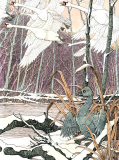 O Patinho Feio, ilustrado por  Tomislav Tomic - The Folio Society - Andrew Lang