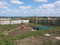 St Ives Cornwall Allotment - April 2016