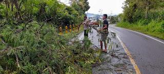 Pohon Tumbang Menutup Bahu Jalan, Personil Polsek Anggeraja Sigap Memotong Dan Memindahkannya