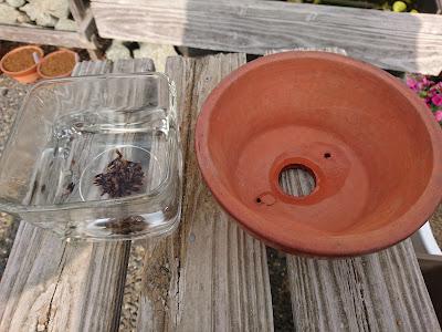 種まき 鉢