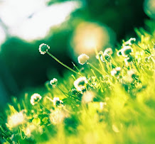 Flower.Image
