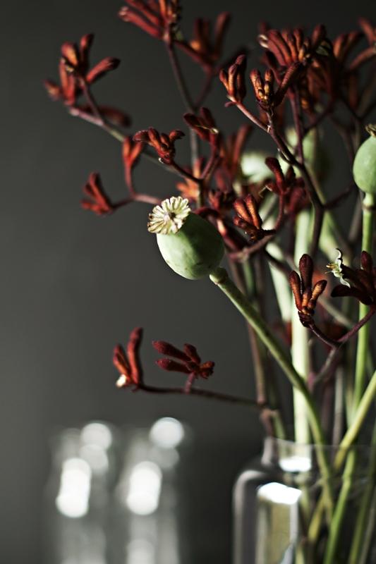 Blog + Fotografie by it's me! - Flower Friday, Mohnkapsel und dunkelrote Blütenzweige