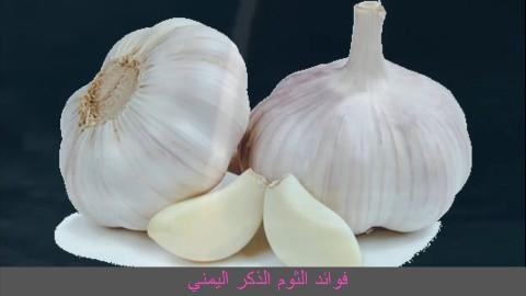 فوائد الثوم الذكر اليمني