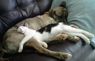 10 Cara Menghilangkan Kutu Pada Anjing dan Kucing