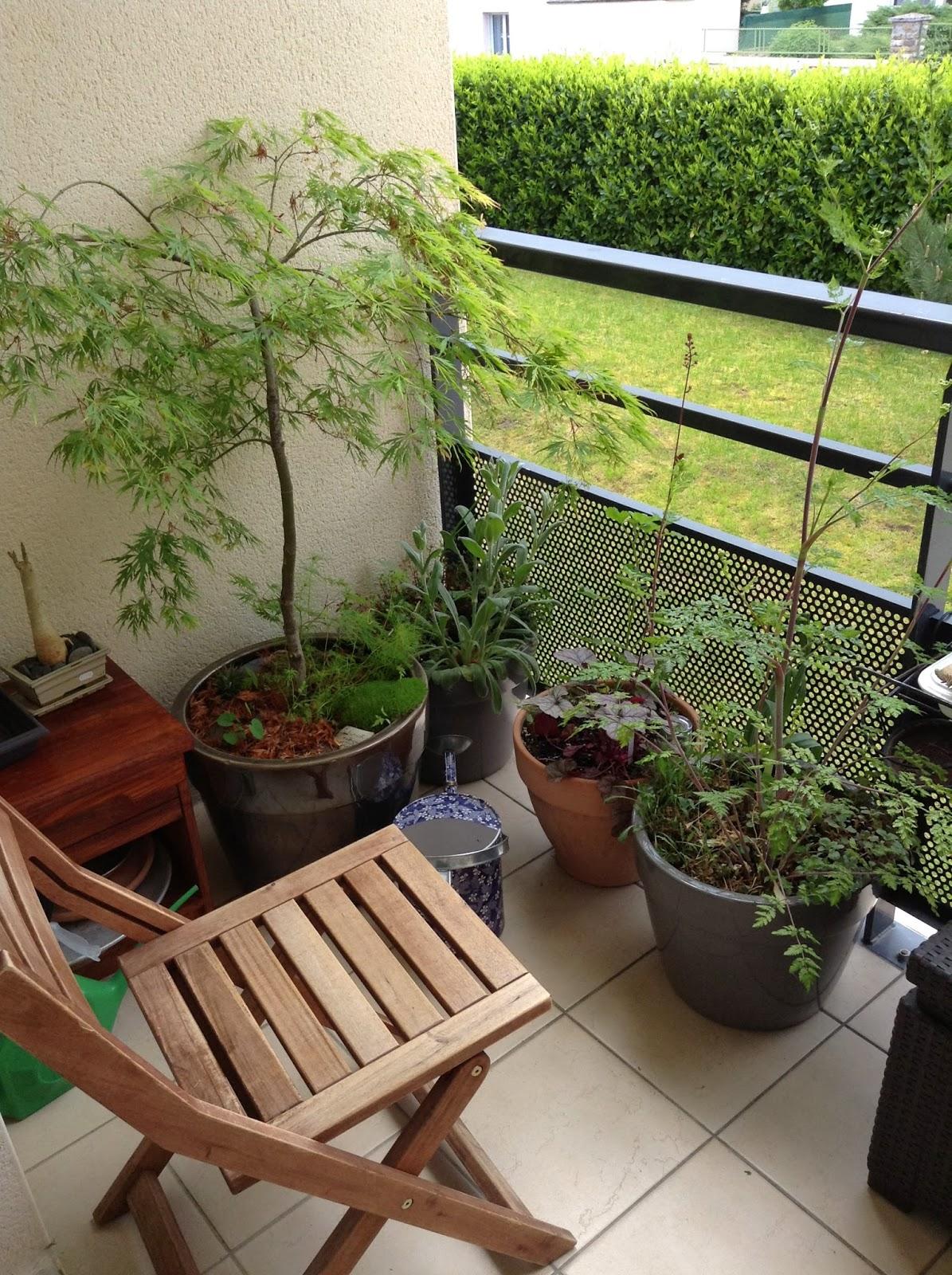 premi res exp riences en permaculture balcon mini jardin. Black Bedroom Furniture Sets. Home Design Ideas