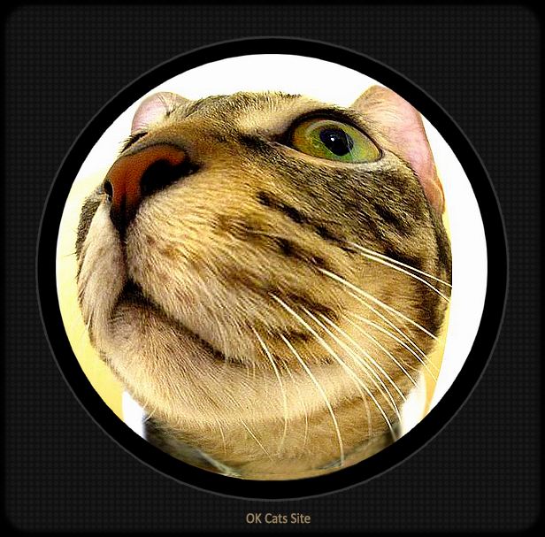 Photoshopped Cat picture • Close up on cat with a funny face (Fish eye lens effect) Open the door Mom, I'm hungry