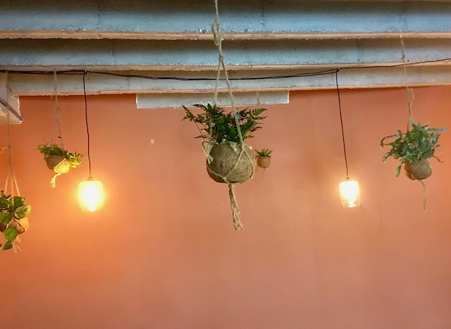 Hangplanten en kokedama's in hangpotjes voor event huren in Hasselt Limburg
