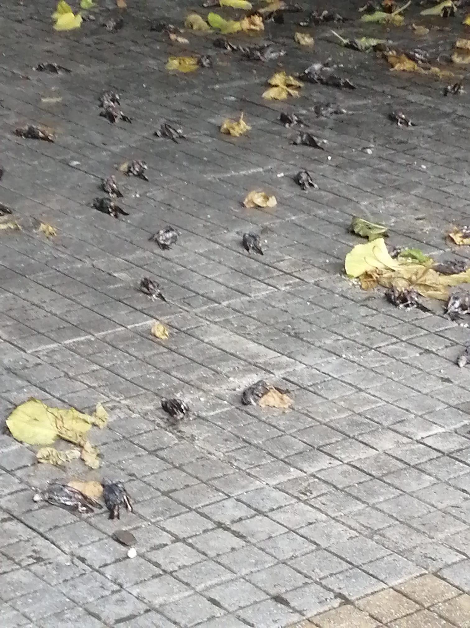 Χιλιάδες νεκρά χελιδόνια λόγω των ισχυρών ανέμων