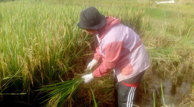Ketua Biro Sosial dan Budaya PERMATA Cab.Bandung dalam menjaga ketahanan pangan ditengah Pandemi Covid-19