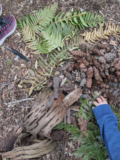 sorting leaves and pinecones An Outdoor Project Inspired by Andy Goldsworthy that Kids Can Do at Home