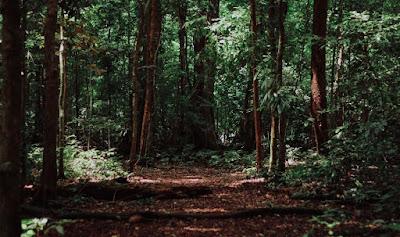Lestarikan Hutan Untuk Anak Cucu Kita Nantinya