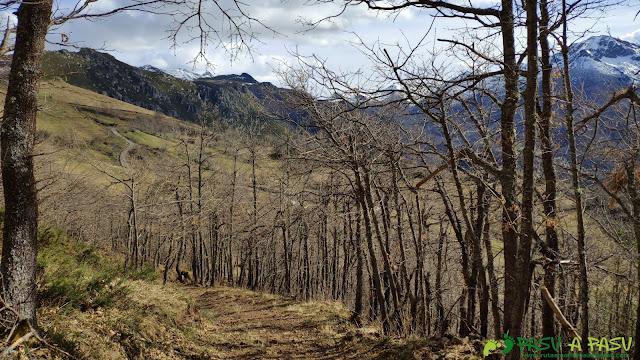 Bosque por el que transita la Ruta del Urogallo