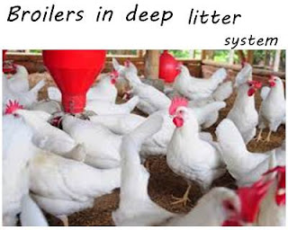 checklists for successful commercial poultry farming
