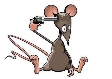 matar ratos, eliminar rato, rato