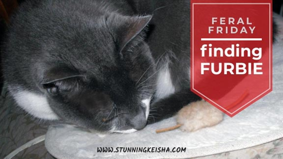 Feral Friday: Finding Furbie