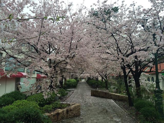 イメージ:桜の咲く花の道