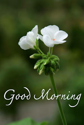 Awesome good morning pic