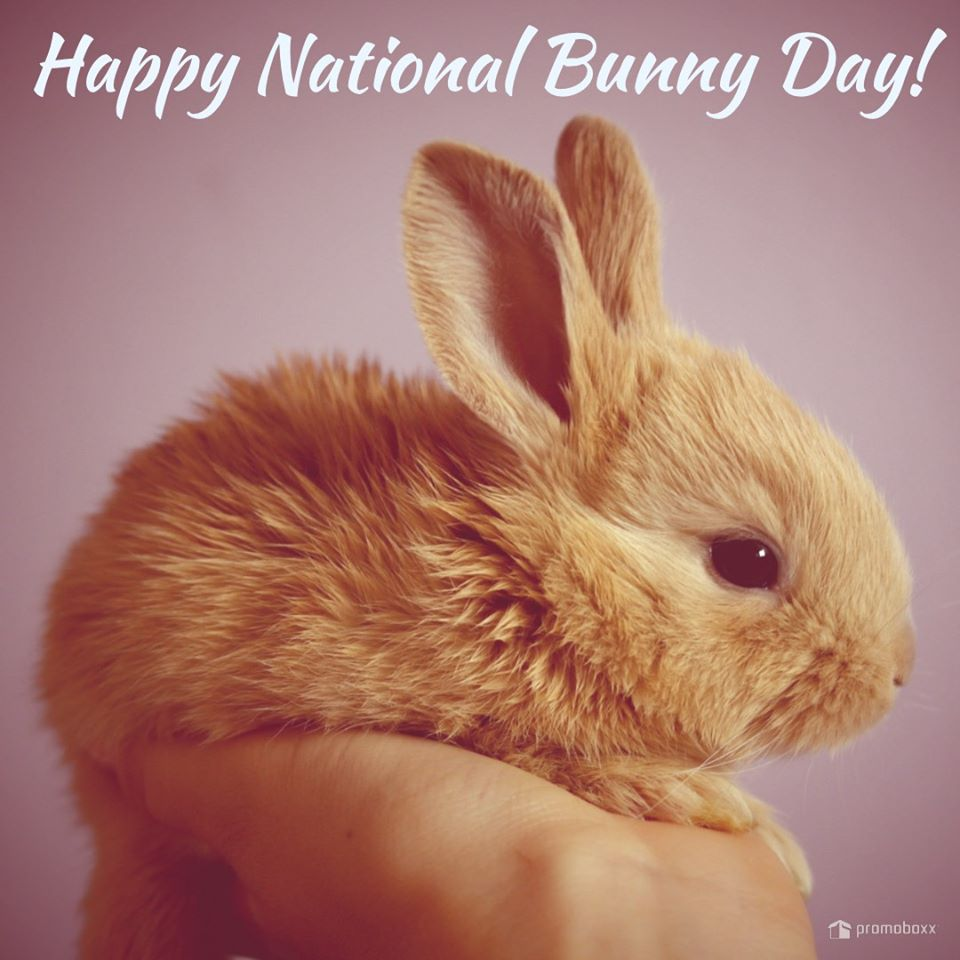 National Bunny Day Wishes Images
