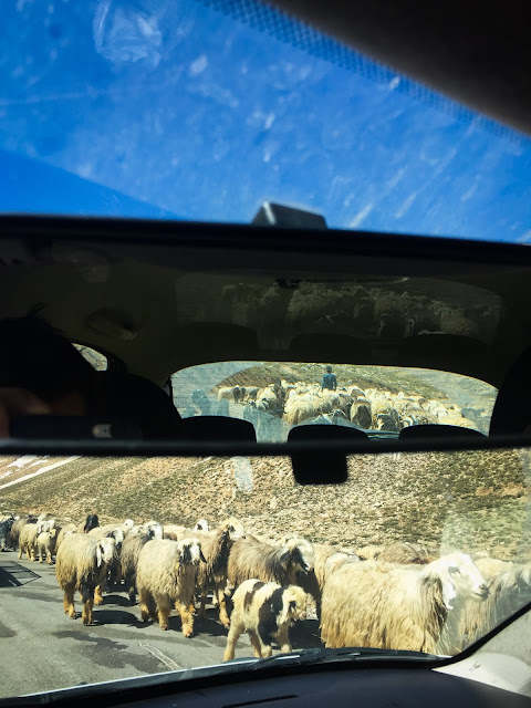 Baa baa on the road: from Chelgerd to Shushtar, Iran